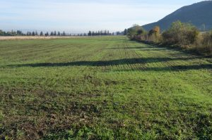 Technologies and technological components for temporary grasslands
