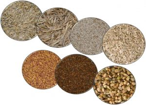 Seed production of grass and  forage legume  Romanian varieties