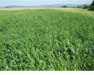 Ecology and genetic resources in perennial grasses and forage legumes of grasslands